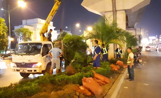 Hà Nội trồng cây cau cảnh dưới gầm đường sắt trên cao - ảnh 1