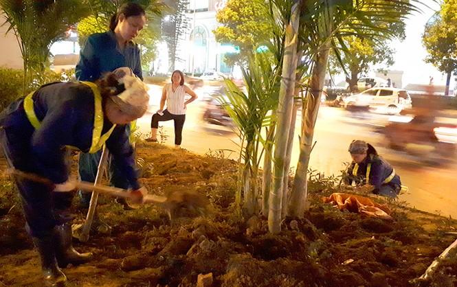 Hà Nội trồng cây cau cảnh dưới gầm đường sắt trên cao - ảnh 3