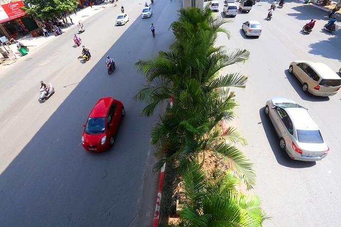 Hà Nội trồng cây cau cảnh dưới gầm đường sắt trên cao - ảnh 5