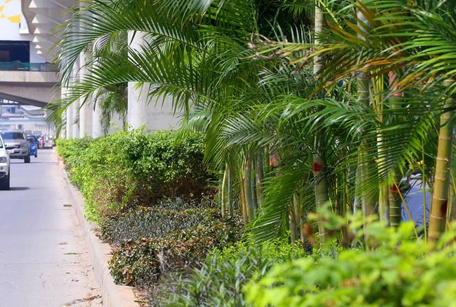 Hà Nội trồng cây cau cảnh dưới gầm đường sắt trên cao - ảnh 6
