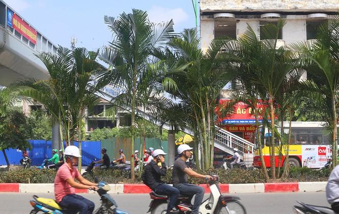 Hà Nội trồng cây cau cảnh dưới gầm đường sắt trên cao - ảnh 7