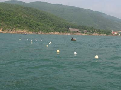 Giàn lưới câu cài mồi nhử cá mập thả xuống trước Khu du lịch Hoàng Gia