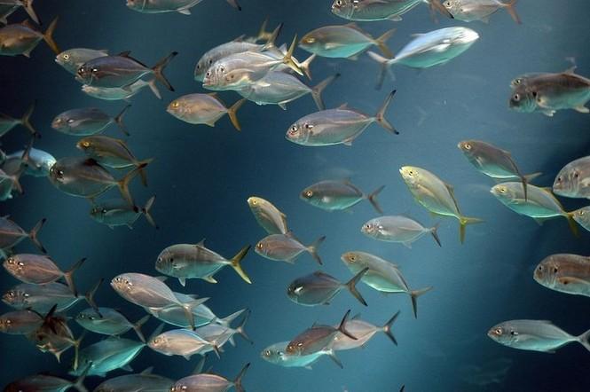 'Lạc' vào bể cá lớn nhất thế giới - ảnh 8