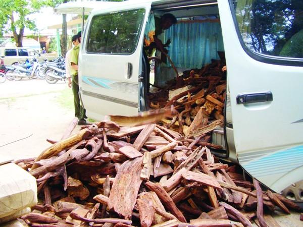Thu giữ gỗ huê khai thác trái phép ở  Phong Nha - Kẻ Bàng năm 2009