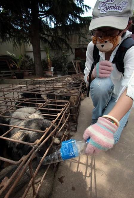 Chăm sóc những chú chó tội nghiệp