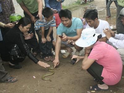 Nhiều người dân sờ vào con rắn