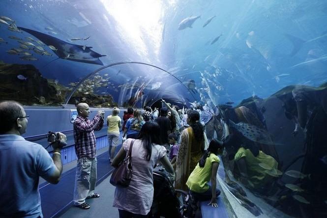 'Lạc' vào bể cá lớn nhất thế giới - ảnh 5