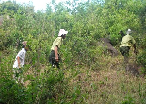 Đoàn săn vào núi Đình, nơi có nhiều hang hốc, bụi rậm nghi là chốn ẩn nấp của dã thú