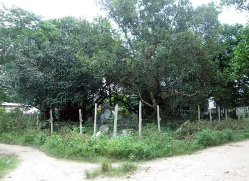 Theo chính quyền địa phương, cách đây 11 năm, một ông già (lúc này đã 72 tuổi) ngụ TP HCM xuống Tây Ninh mua lại mảnh đất rộng khoảng 1.000 m2, ngay giữa khu dân cư ấp Long Hải (xã Trường Tây, huyện Hòa Thành, tỉnh Tây Ninh) để xây một ngôi nhà thờ. Khu vườn không rào chắn, nằm tại ngã ba đường, giữa khu dân cư, nơi có nhiều người qua lại