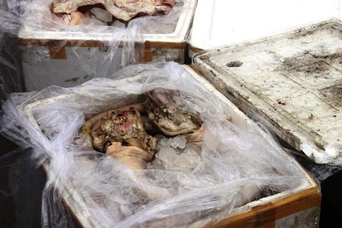 Bắt 300kg thịt, nội tạng thối - ảnh 2