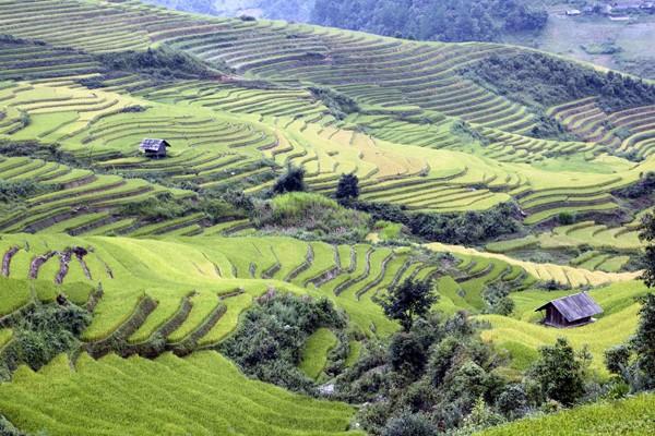 Vào mùa Hạ, đó là những bức thảm mơn mởn màu xanh lúa non và đến mùa Thu lại trở thành những làn sóng lúa chín vàng rực rỡ.