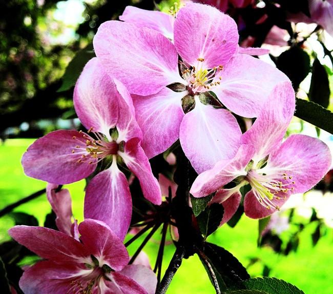 Vũ điệu của mùa xuân - ảnh 9
