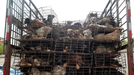 Chiếc xe chở hàng trăm chú chó trong những chiếc lồng ọp ẹp