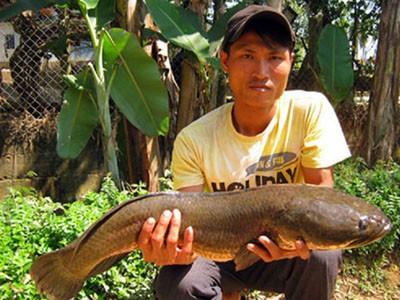 Lũ lượt xem cá lóc nặng 10kg - ảnh 1