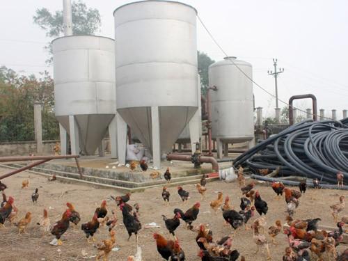 Nhà máy nước thôn Quảng Nguyên, xã Quảng Phú Cầu, huyện Ứng Hòa - Hà Nội thành nơi nuôi gà