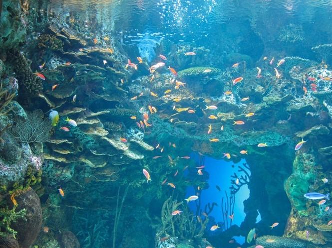 'Lạc' vào bể cá lớn nhất thế giới - ảnh 7