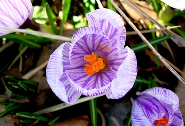 Vũ điệu của mùa xuân - ảnh 10