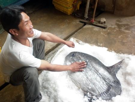 Vì con cá chết ngay khi được kéo lên nên anh Đoàn phải ướp đá