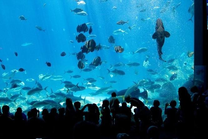 'Lạc' vào bể cá lớn nhất thế giới - ảnh 1