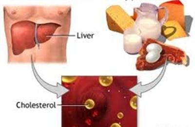 Làm gì để phòng ngừa tăng cholesterol máu? - ảnh 1