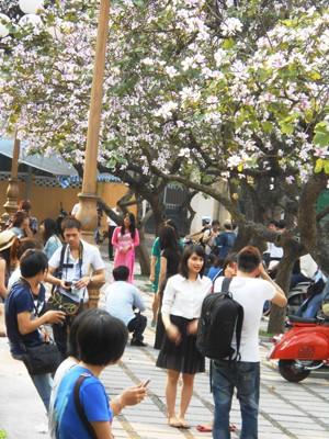 Các bạn trẻ Hà Nội háo hức chụp ảnh