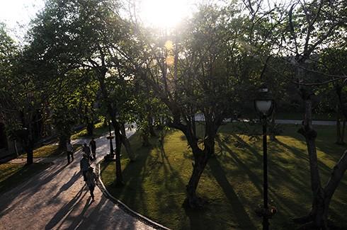 Không gian ở ngoài được kết hợp hài hòa với công viên cây xanh độc đáo. Anh Đôn cho biết: