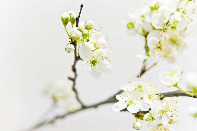 Vũ điệu của mùa xuân - ảnh 1