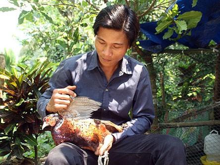 Theo anh Thiệp, chim trĩ là giống vật nuôi có giá trị kinh tế cao, dễ nuôi và phát triển nhanh