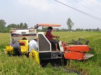 """Máy gặt đập liên hợp đang tiêu hủy """"lúa lạ"""" tại âp 1 xã Hòa Phú ngày 8-3. (Ảnh: Báo Lao Động)"""