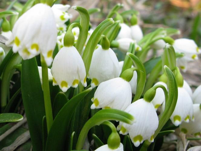 Vũ điệu của mùa xuân - ảnh 11