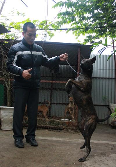 Xoài là con chó anh Thắng quý nhất, nó được trả giá cả trăm triệu đồng. Ảnh: Hoàng Phương