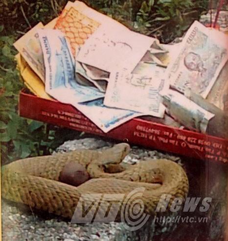 Ngàn người vái một con rắn: Chuẩn bị dựng miếu! - ảnh 1