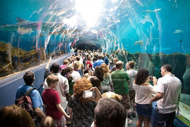 'Lạc' vào bể cá lớn nhất thế giới - ảnh 6