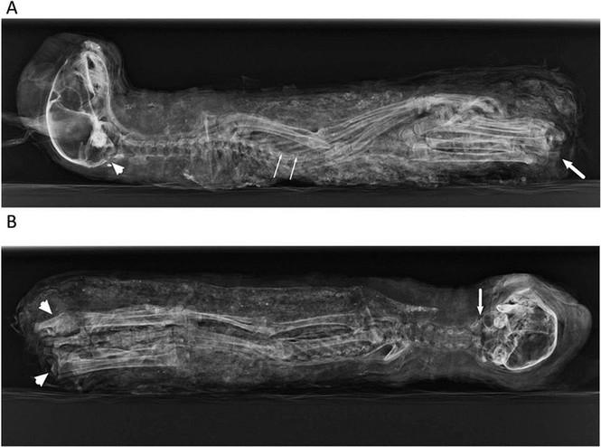 Mèo con được nuôi để làm xác ướp cúng lễ cho các vị thần             ở Ai Cập cổ đại từ hàng ngàn năm trước