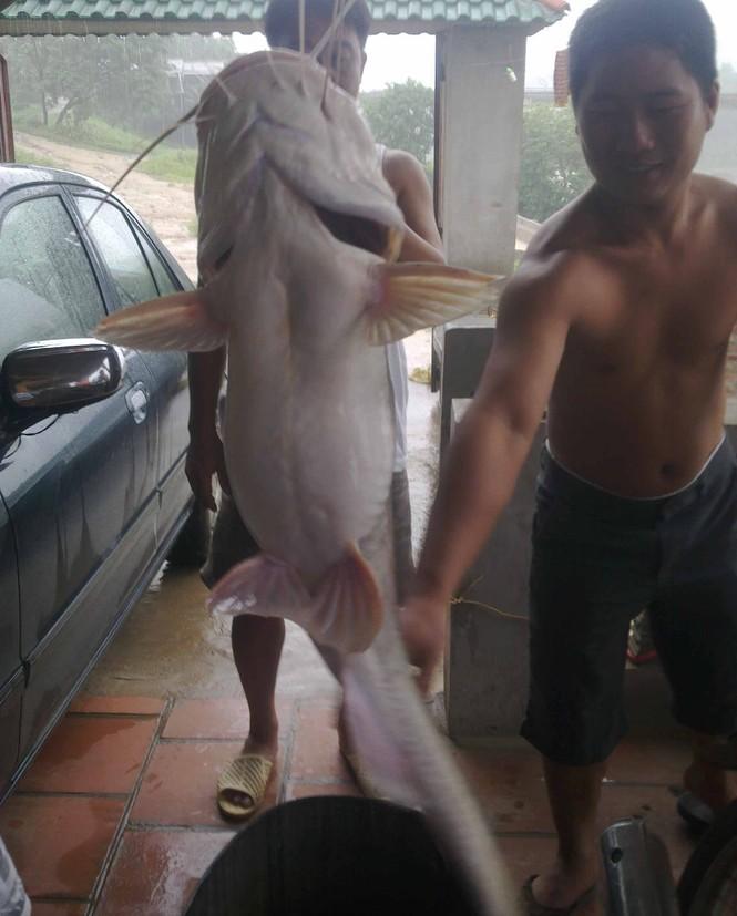 Bắt được cá lăng 'khủng' nặng 54kg trên sông Lô - ảnh 3