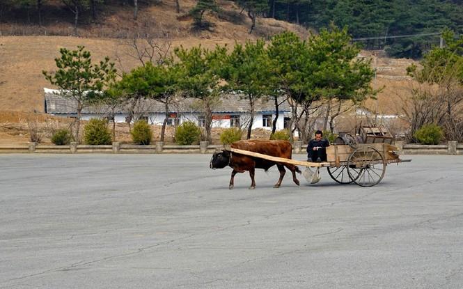 Nông dân điều khiển xe bò đi ngang qua địa phận giữa thủ đô Bình Nhưỡng và vùng phi quân sự