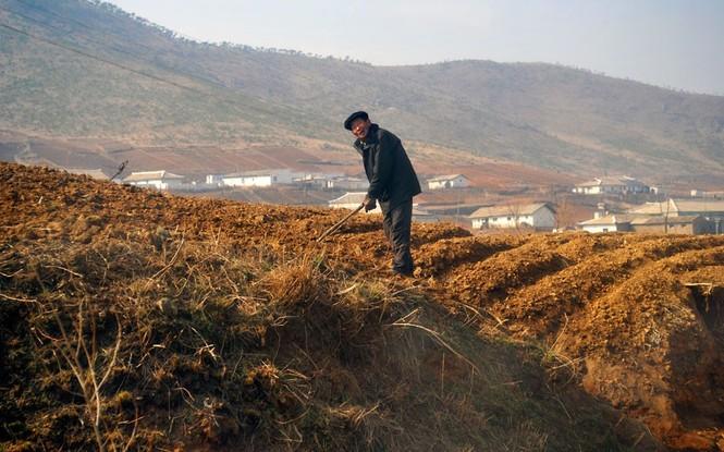 Nông dân làm việc trên cánh đồng