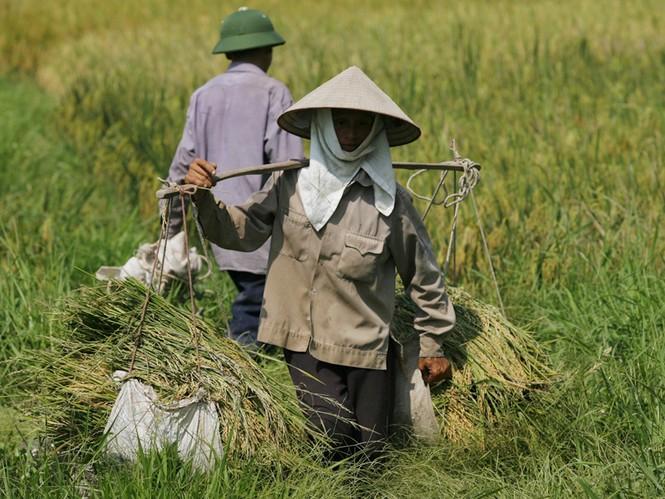 Theo TS Vũ Tuấn Anh: Không nên thường xuyên thu hồi, chia lại ruộng đất             Ảnh: Hồng Vĩnh