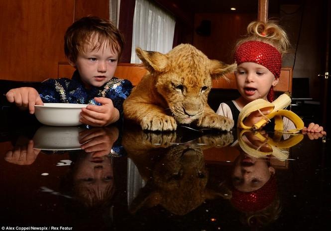 Em bé chơi cùng sư tử - ảnh 1
