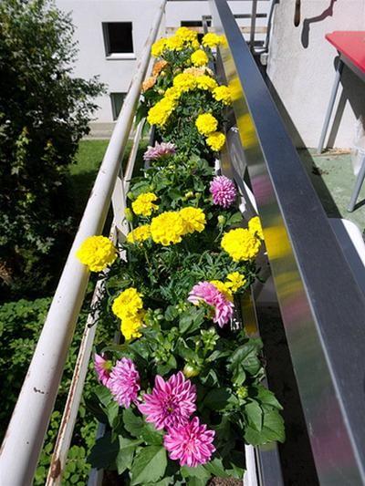 Vườn hoa trên bancông - Ảnh: Mydesiredhome