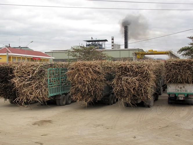 Xe chở mía vào Nhà máy đường Ayunpa luôn quá tải quá khổ