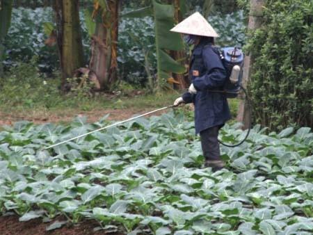 Một người dân đang phun thuốc trừ sâu cho rau