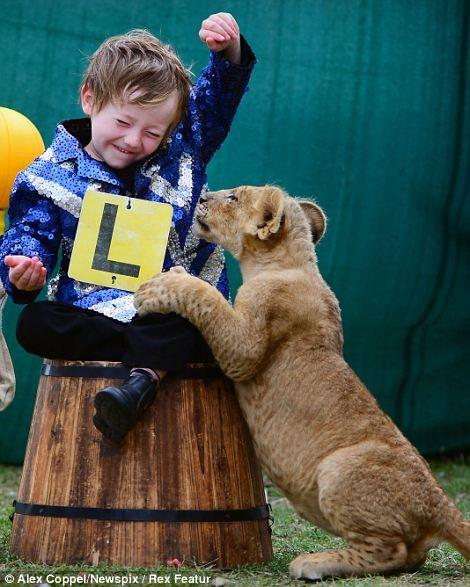 Em bé chơi cùng sư tử - ảnh 5