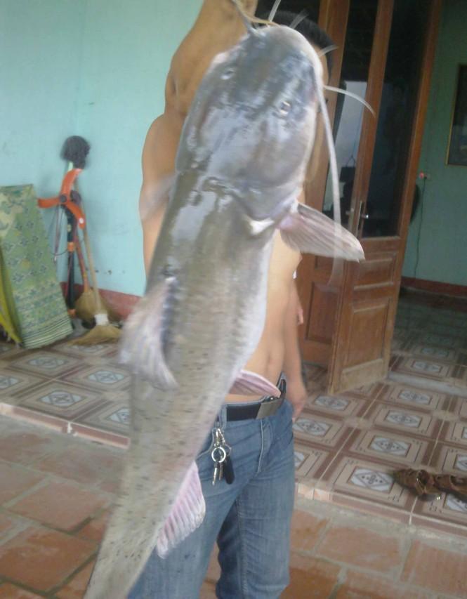 Bắt được cá lăng 'khủng' nặng 54kg trên sông Lô - ảnh 1
