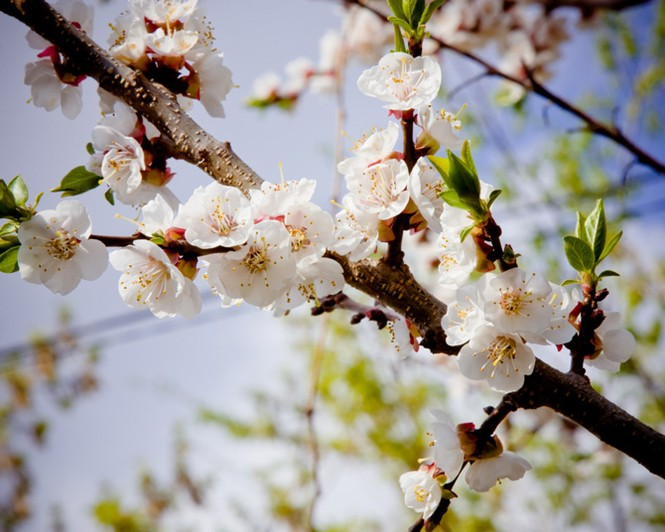 Vũ điệu của mùa xuân - ảnh 4