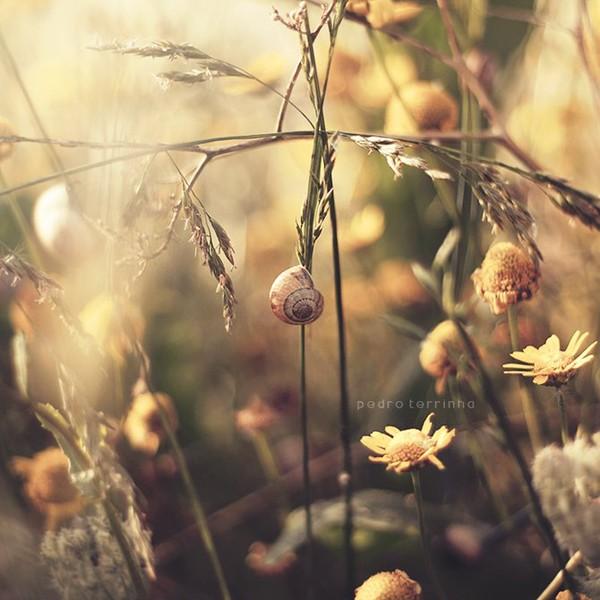 Những khoảnh khắc đẹp như mơ - ảnh 7