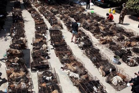 Điệp vụ giải cứu 500 chú chó bị nhốt trên xe tải - ảnh 4