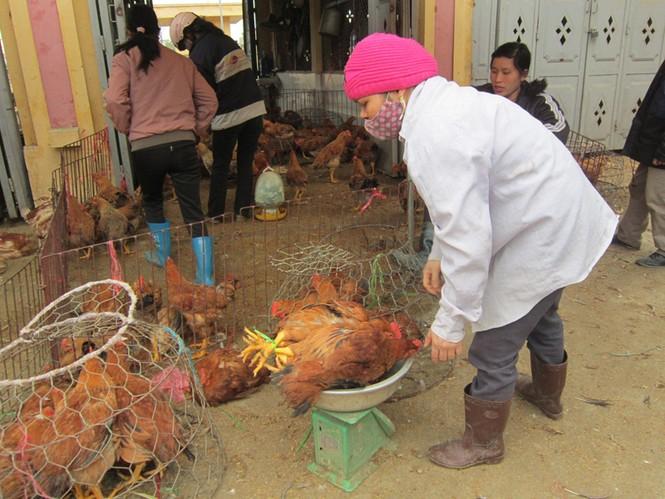 Chợ gia súc Hà Vĩ (Thường Tín, Hà Nội) rất khó kiểm soát dịch             Ảnh: Nguyễn Thảo