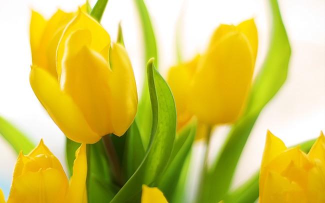 Vũ điệu của mùa xuân - ảnh 6