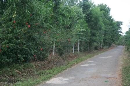 Con đường vắng vẻ dẫn vào khu vườn nhà bà Hường